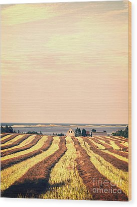Coastal Farm Pei Wood Print by Edward Fielding