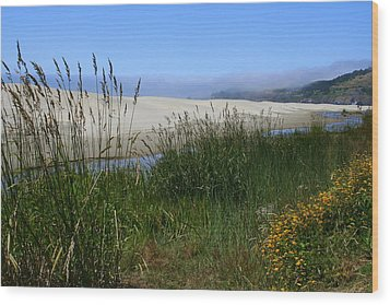 Coastal Grasslands Wood Print