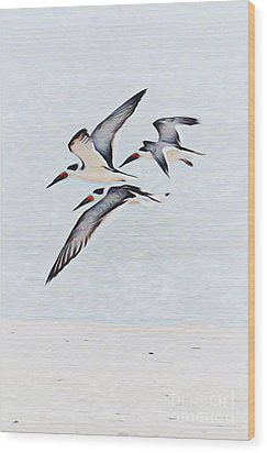 Coastal Skimmers Wood Print