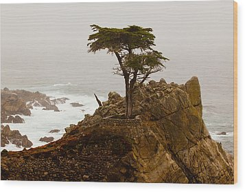 Coastline Cypress Wood Print