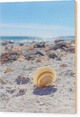Cockle Shell Summer At Sanibel Wood Print by Peta Thames