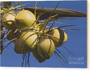 Wood Print featuring the photograph Coconut 1 by Teresa Zieba