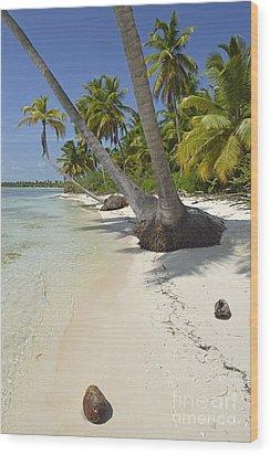 Coconuts On Pristine Tropical Beach Wood Print by Sami Sarkis