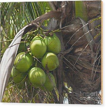 Coconuts Proliferate Wood Print by Michelle Wiarda