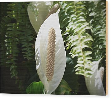 Cocoon Flower Wood Print by Felipe Nunez