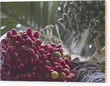 Cocos Nucifera - Niu Mikihilina - Palma - Niu - Arecaceae -  Palmae Wood Print by Sharon Mau