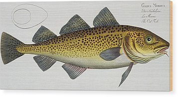 Cod Wood Print by Andreas Ludwig Kruger