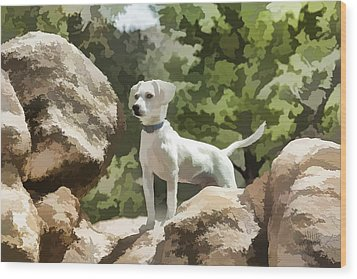 Cody On The Rocks Wood Print