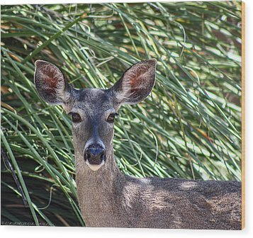 Wood Print featuring the photograph Coes Deer by Elaine Malott