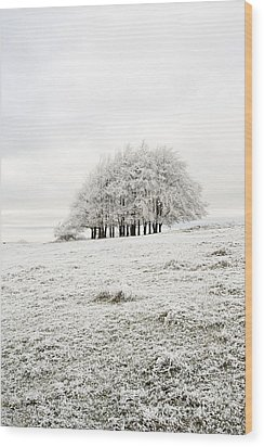 Cold Wood Print by Anne Gilbert