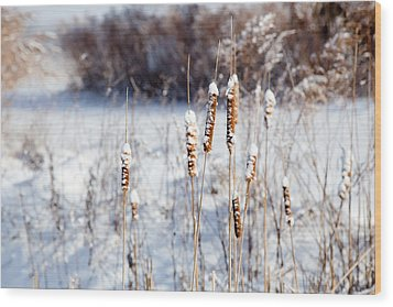 Cold Cattails Wood Print