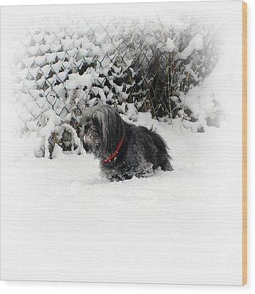 Cold Feet Wood Print by Sharon Lisa Clarke