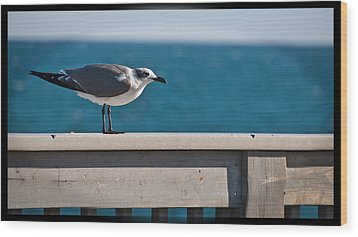 Cold Gull Wood Print