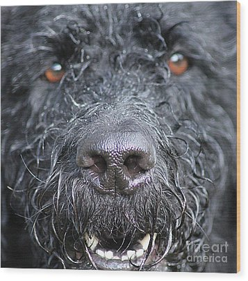 Cold Wet Nose Wood Print by Michelle Orai