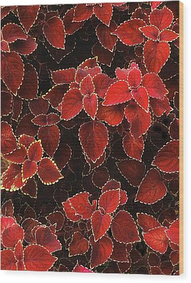 Coleus Wood Print by Jessica Jenney