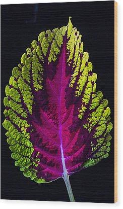 Coleus Leaf Wood Print by Garry Gay