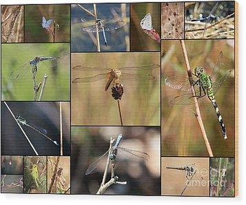 Collage Marsh Life Wood Print