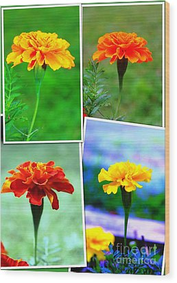 Collage Of Marigolds Wood Print by Judy Palkimas