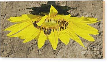 Collecting In The Sun Wood Print by John Debar