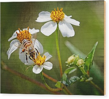 Wood Print featuring the photograph Collecting Pollen by Dawn Currie