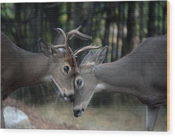 Wood Print featuring the photograph Collide by Rita Kay Adams