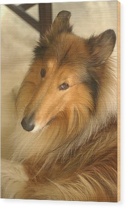 Collie Glamour Shot Wood Print by Suzanne Powers