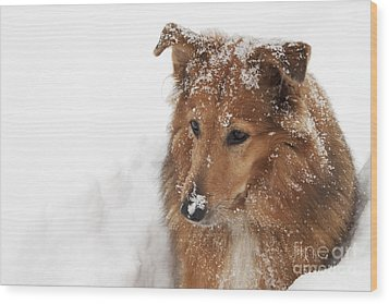 Collie In The Snow Wood Print by Jeannette Hunt
