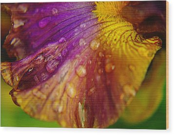 Color And Droplets Wood Print by Jeff Swan