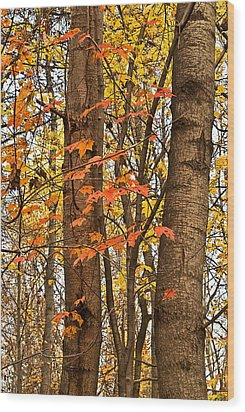 Color And Trees Lan 225 Wood Print by G L Sarti