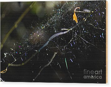 Wood Print featuring the photograph Color Dots Spider Net by Yulia Kazansky