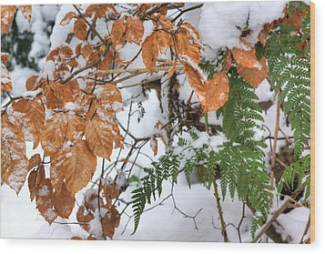 Color In The Snow Wood Print by David Birchall
