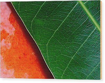 Color Me Mango Sweet And Spicy Wood Print by James Temple