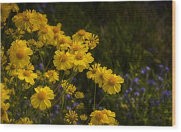 Color Me Yellow  Wood Print by Saija  Lehtonen