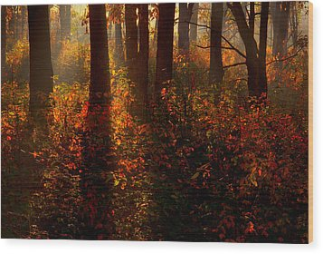 Color On The Forest Floor Wood Print by Robert Charity