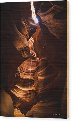 Color Within Wood Print by Bill Cantey