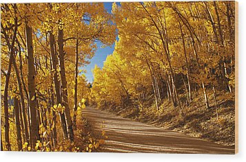Colorado Aspen Tunnel  Wood Print by Michael J Bauer