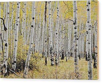 Wood Print featuring the photograph Colorado Aspens by Geraldine Alexander