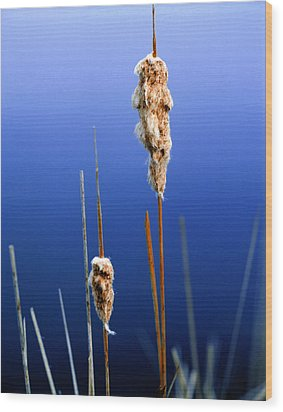Colorado Cattails Wood Print