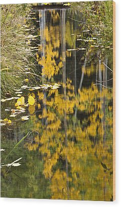 Wood Print featuring the photograph Colorado Changing Five  by Eric Rundle