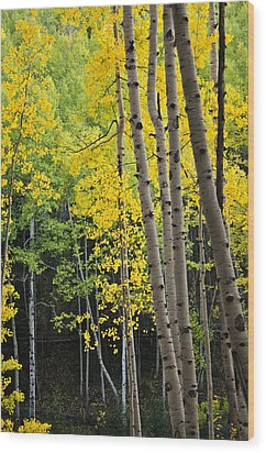 Wood Print featuring the photograph Colorado Changing Two  by Eric Rundle