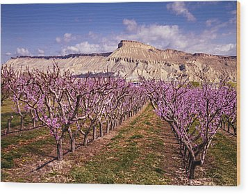 Colorado Orchards In Bloom Wood Print