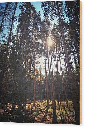 Colorado Pines Wood Print by Garren Zanker