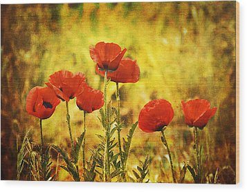 Wood Print featuring the photograph Colorado Poppies by Tammy Wetzel