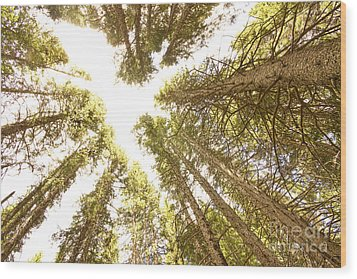 Colorado Rocky Mountain Forest Ceiling Wood Print by James BO  Insogna
