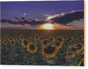 Colorado Sunflowers Wood Print by Teri Virbickis