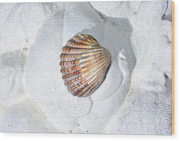 Colored Seashell  Wood Print
