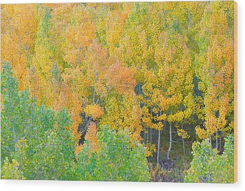Wood Print featuring the photograph Colorful Aspen Forest - Eastern Sierra by Ram Vasudev