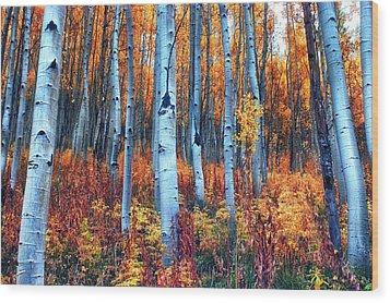 Colorful Aspens Wood Print by Brian Kerls