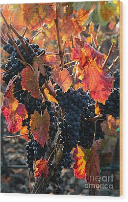 Colorful Autumn Grapes Wood Print by Carol Groenen