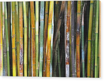Wood Print featuring the photograph Colorful Bamboo by Jodi Terracina